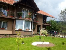 Accommodation Delureni, Erzsoárpi Guesthouse