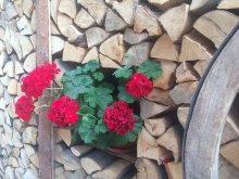 Casă de oaspeți Grădinari, Pensiunea Adina