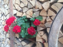Guesthouse Chijic, Adina Guesthouse