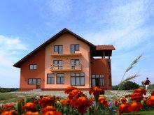Accommodation Coltău, Laleaua Pestrita B&B