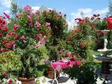 Pensiune Grădinari, Pensiunea Sofia