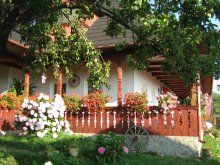 Accommodation Tudor Vladimirescu (Avrămeni), Ana Maria Guesthouse