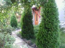 Accommodation Valea Mare (Săvârșin), Péter Annamária & Géza Guesthouse